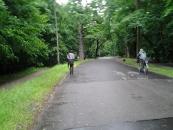 Droga przez las do UKSW