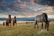 Hipologia i jeździectwo (Fot.freedigitalphotos.net)