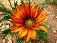 Medycyna roślin (Fot.freedigitalphotos.net)