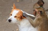 Kierunek Behawiorystyka zwierząt (Fot.freedigitalphotos.net)