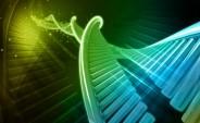 Biologia 2013 poziom rozszerzony (Fot.freedigitalphotos.net)