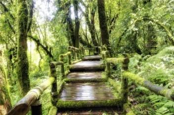 Ile zarabia leśniczy (Fot.freedigitalphotos.net)
