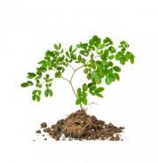 Kierunek studów zielarstwo (Fot.freedigitalphotos.net)