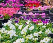 Ogrodnictwo (freedigitalphotos.net)