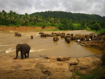 Środowisko przyrodnicze Sri Lanki (fot.Aidan Jones, wikipedia.org)