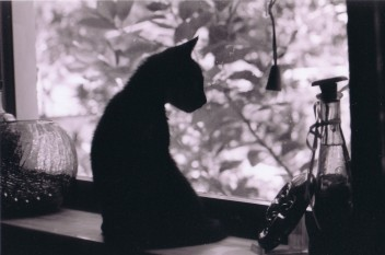 Czarny kot przy oknie(fot.morguefile.com)
